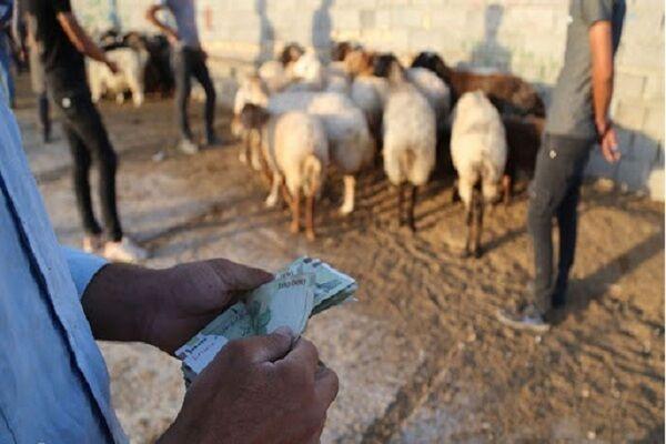 اختلاف قیمت، کولبران را برای قاچاق دام وسوسه می کند