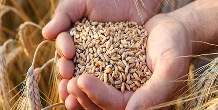 افزایش ۲۳ درصدی تولید بذر گندم در کشور