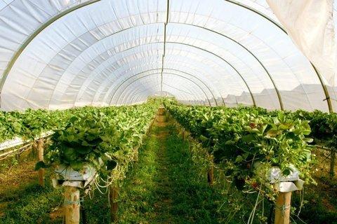 رتبه چهارم استان آذربایجان شرقی در تولید محصولات گلخانه ای در کشور