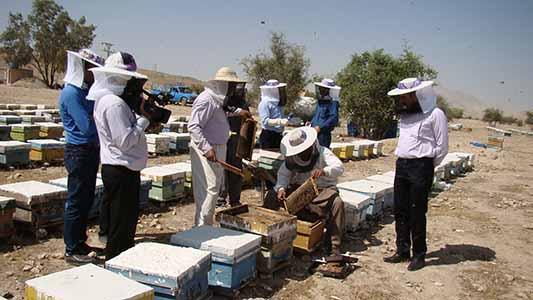 گردشگری زنبور عسل به عنوان مکمل تولید