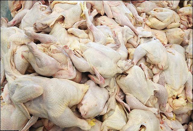 یک پیشنهاد برای حل مشکل گرانی مرغ