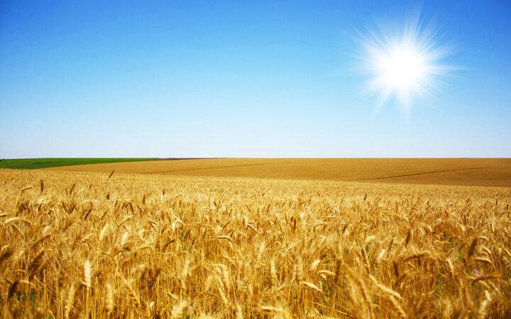افزایش درآمد کشاورزان با توسعه شرکتهای سهامی زراعی