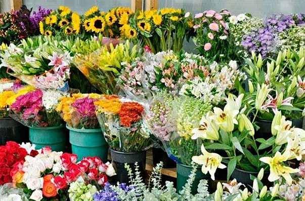 امسال ۱۰ میلیارد تومان گل و گیاهان زینتی از نوشهر به خارج صادر شد