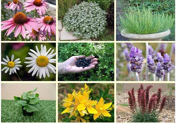 تولید بیش از 290 هزار تن گیاهان دارویی در کشور