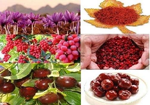 سهم کشاورزی بیش از ۳ درصد تولید ناخالص داخلی خراسان جنوبی است