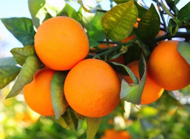 صادرات 18 تن مرکبات داراب به کشورهای اروپایی