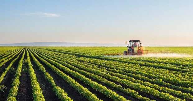 ضرر ۱۰۰۰ تومانی کشاورزان در تولید هرکیلو گندم/چرا دولت در تشکیل شورای قیمتگذاری وقتکُشی میکند؟