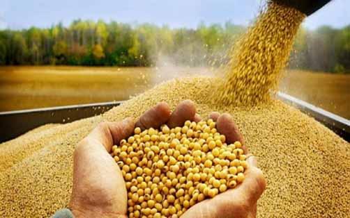 کاهش وزنی و ارزشی واردات نهاده های دامی/واردات جو 49 درصد افت کرد