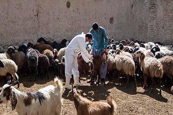 اولویت دامپزشکی، تامین بهداشت و سلامت حیوانات و فراوردههای خام دامی است