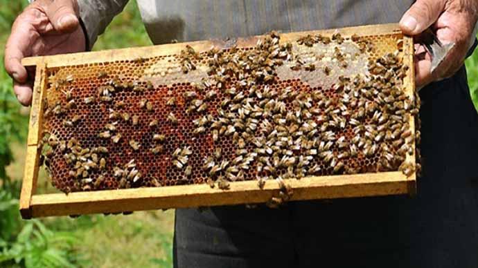 برداشت ۸ تن عسل در بخش رخ شهرستان تربتحیدریه