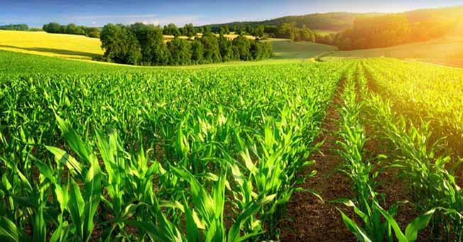 توسعه کشاورزی متناسب با صنایع تبدیلی نباشد منجر به افزایش ضایعات میشود