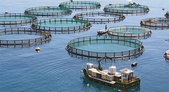 تولید 700 تن ماهی در قفس در مازندران/ صادرات 18 میلیون دلاری فراورده های شیلاتی