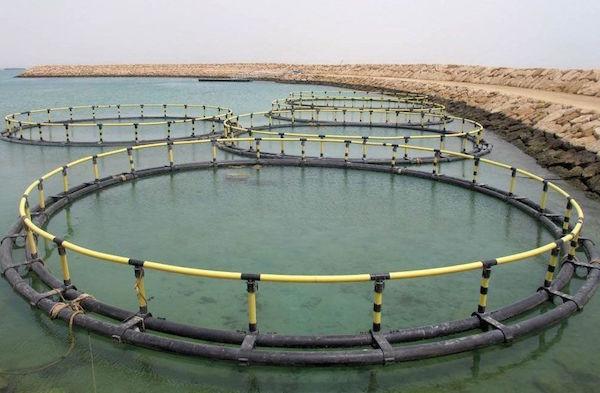 پرورش ماهی منطقه رودشور، پروژهای اشتغالزا برای روستاییان گناوه