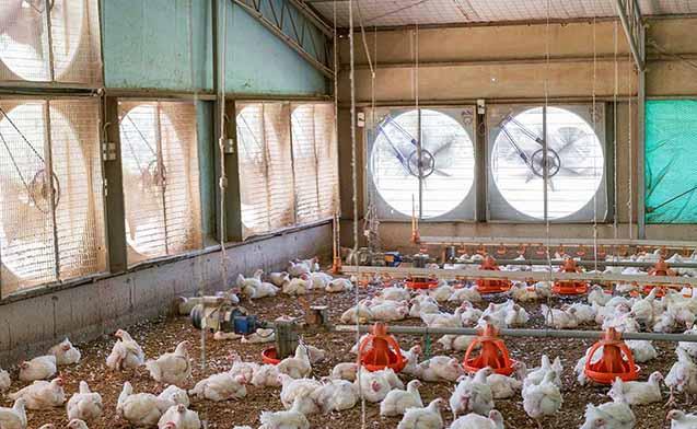 کاهش 100درصدی مصرف سوخت توسط مرغدار نمونه کشور