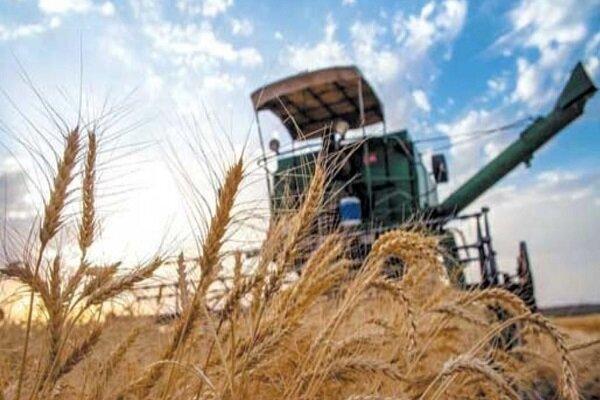 انتقاد گندمکاران از عدم اصلاح قیمت در آستانه فصل برداشت