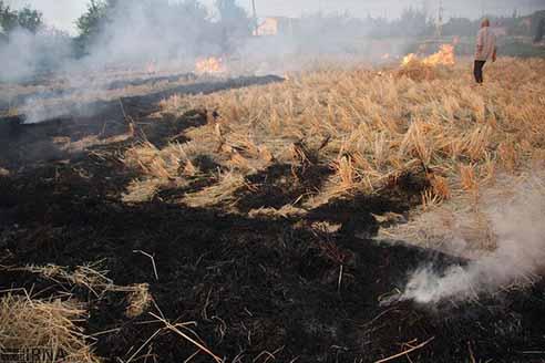 تأثیر سوزاندن کاه و کلش گندم بر خاک
