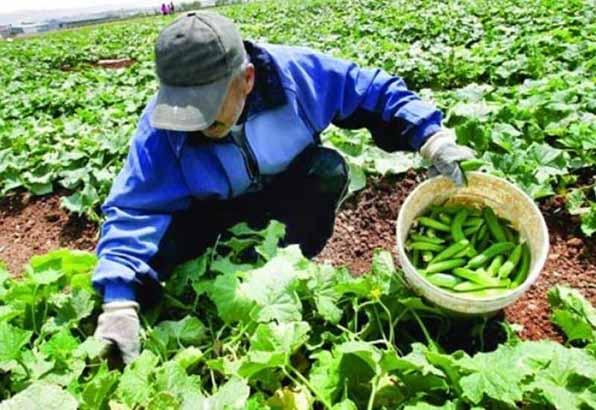 تعاون روستایی بر امور تشکلهای روستایی و کشاورزی دخالتی ندارد