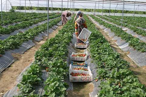 توسعه کشاورزی اصفهان در گرو ارتقای صنایع تبدیلی و تجهیزات