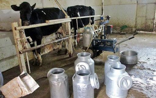 دلیل اختلاف وزارت جهاد و مرکز آمار درباره میزان تولید شیر چیست؟