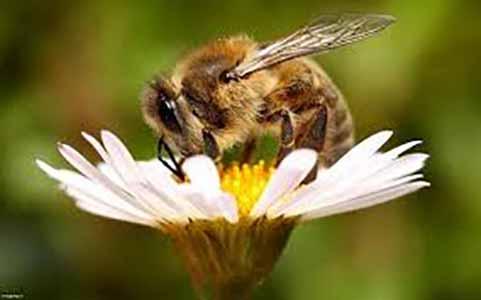 شهد شیرین عسل و رونق تولید داخلی