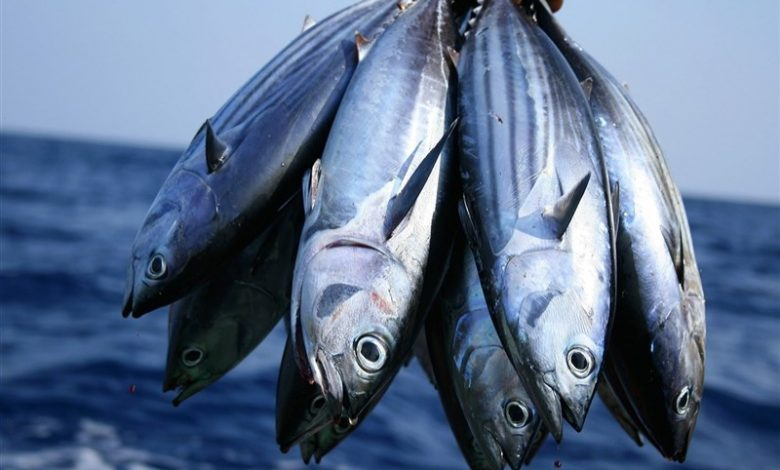 ۱۷درصد پروتئین مورد نیاز جامعه از آبزیان تأمین میشود