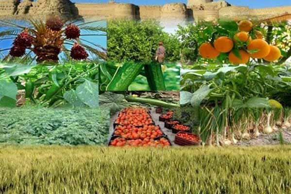 برگزاری اولین نمایشگاه فوق تخصصی زنجیرههای ارزش محصولات باغبانی 2021 از حلقه تحقیق و توسعه تا فروش