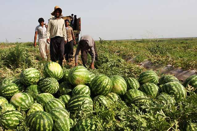 تداوم ورشکستگی کشاورزان جنوب کرمان