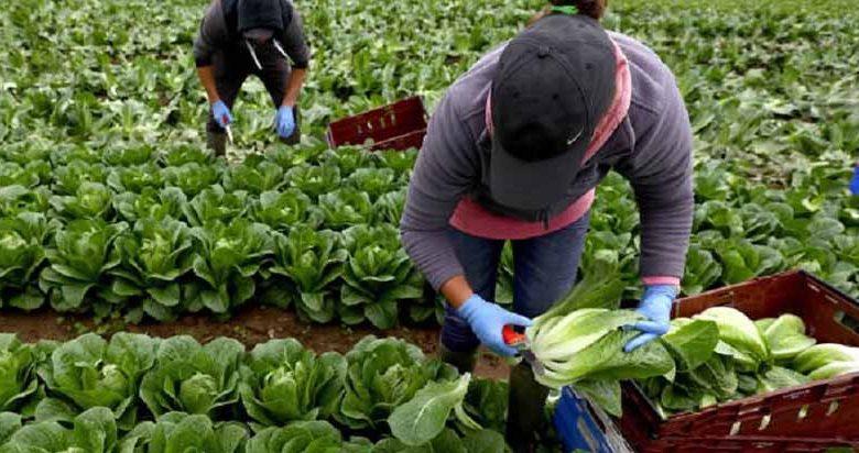 طرح مزارع سازگاری برای رفع موانع تولید در مازندران اجرایی میشود
