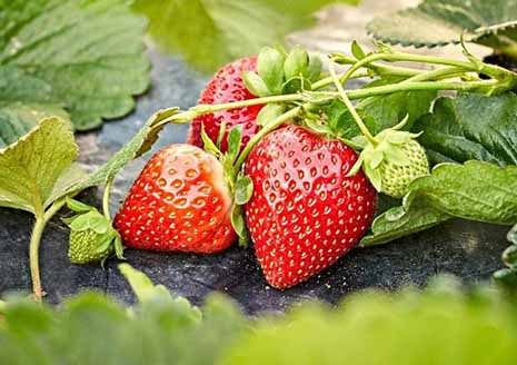 نخستین میوه بهاره مازندران وارد بازار شد