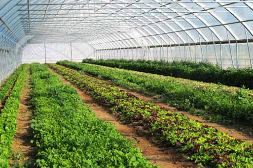 افزایش سه برابری گلخانههای همدان برای گذر از کم آبی