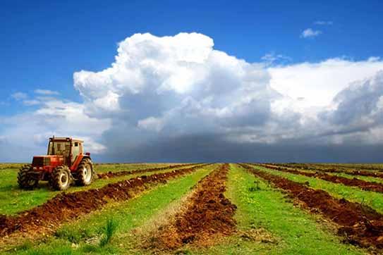 باران اخیر کورسوی امید را در کشاورزان خراسان شمالی زنده کرد