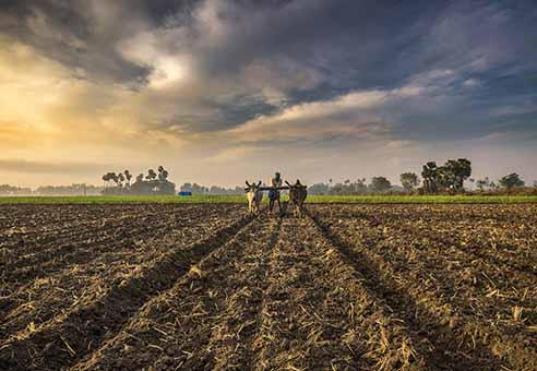 توصيه های هواشناسی کشاورزی از تاريخ 12 لغايت 15 اردیبهشت 1400