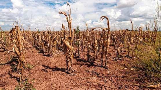 خشکسالی مزارع خرمشهر را تهدید میکند