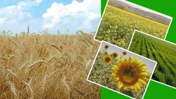 مسیر مخالف دولت با سیاست جهانی در حمایت از محصولات استراتژیک کشاورزی