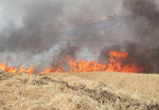 چرا کشاورزان، مزارع را آتش میزنند؟