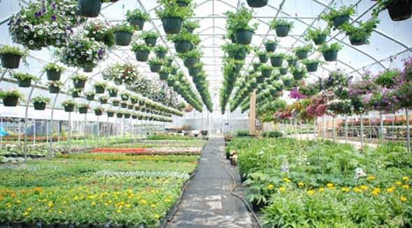 کنترل اقلیم گلخانه به روشی نوین