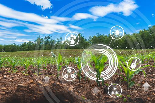 توصيه های هواشناسی کشاورزی از تاريخ 23 لغايت 26 خرداد 1400