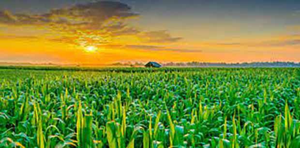 رویای دست یافتنی صادرات 20 میلیارد دلاری در بخش کشاورزی