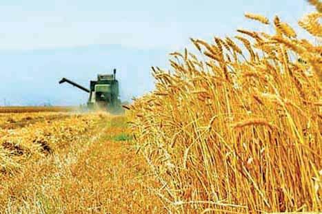 چرا خودکفایی در تولید محصولات کشاورزی مهم است؟