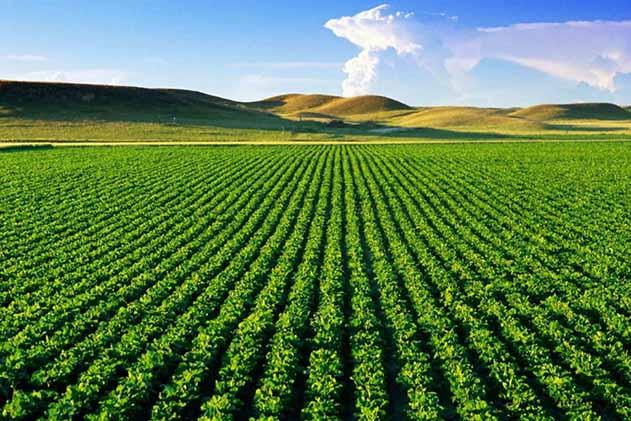کشاورزی پیشران اقتصاد روسیه