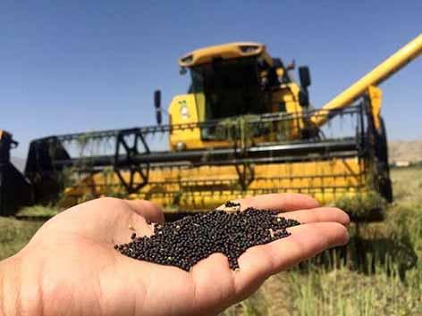 کشت قراردادی مشکلات تنظیم بازار محصولات کشاورزی را برطرف میکند