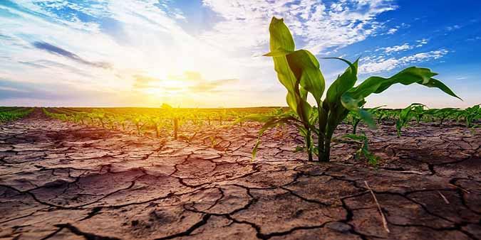 اخراج وزیر کشاورزی قزاقستان به دلیل خسارت خشکسالی