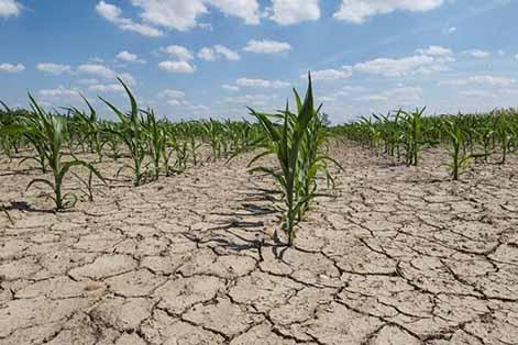 از خشکسالی کشاورزی چه میدانیم؟