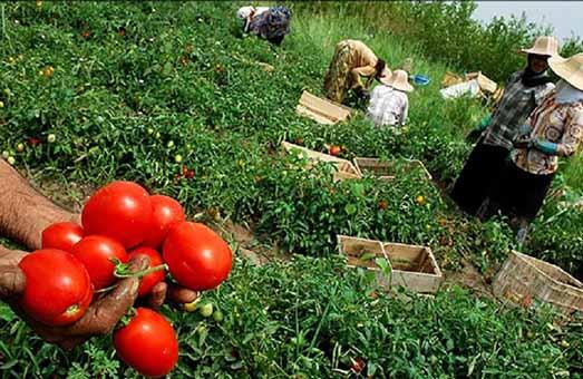 اصلاح الگوی کشت با خشکسالی های سالهای اخیر در استان کرمان