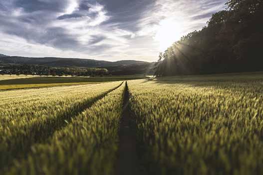 توصيه های هواشناسی کشاورزی از تاريخ 23 تیر لغايت 27 تیر 1400