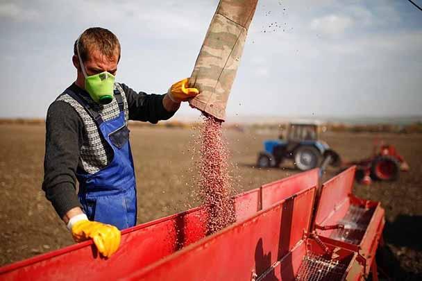 روسیه با افزایش تولیدات کشاورزی گرانی را مهار کرد