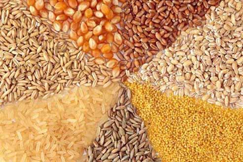 معطلی خوراک دام در گمرک و سردرگمی دامداران