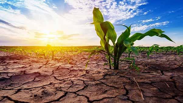 نقش خشکسالی بر تغییر کاربری اراضی