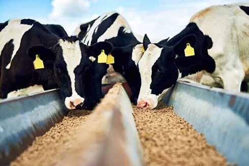 هشدار درباره حذف دام های مولد و بحران کمبود گوشت در 3 ماه آینده