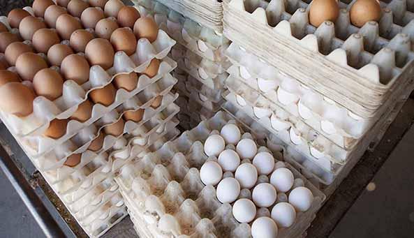 هشدار درباره کاهش تولید تخم مرغ